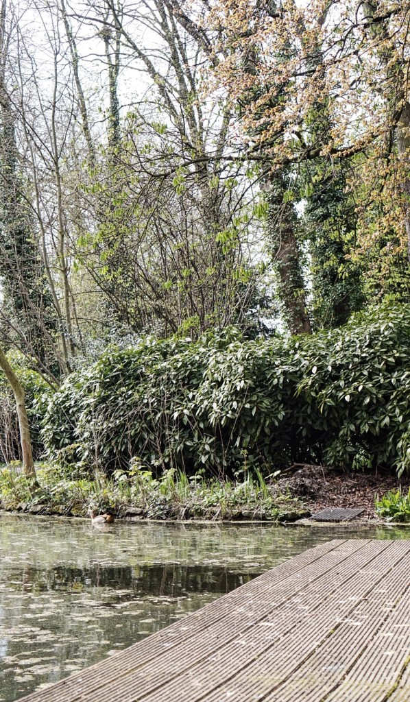 MerCarrie, Tajemniczy ogród, czyli barwy ochronne