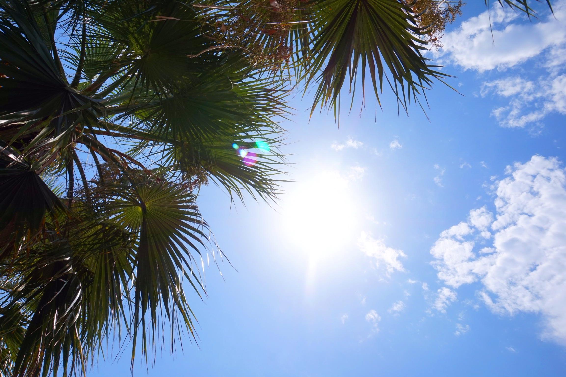są palmy - są wakacje